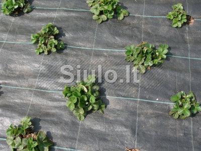 Agrotekstilė braškynams