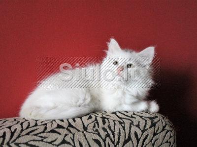 2 mažos katytės ieško namų