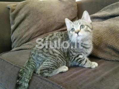 Mieli ir žavingi kačiukai philipteresa91 gmail. com