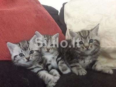 Sibiro kačiukai philipteresa91 gmail. com