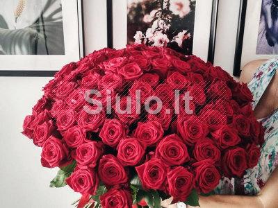 101 rožė su pristatymu Vilniuje